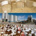 فروش کنسانتره مرغ گوشتی ایرانی و خارجی