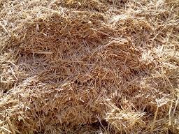 قیمت کاه گندم و کلش