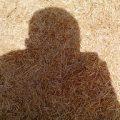 خرید بهترین کاه و کلش گندم همدان