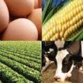 قیمت روز اقلام خوراک دام و طیور
