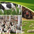 کارخانه تولید خوراک دام و طیور درجه یک استان مازندران