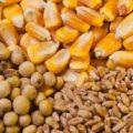قیمت ذرت و سویا دامی خارجی چقدر است؟