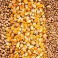 قیمت سویا و ذرت برزیل برای طیور