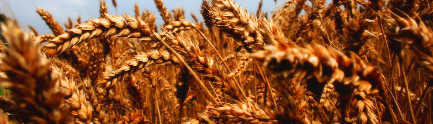 تولید و توزیع خوراک دام و طیور