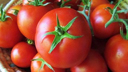 تفاله گوجه خشک