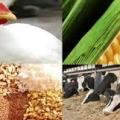 خرید خوراک دام و طیور از نهاده تا خوراک آماده